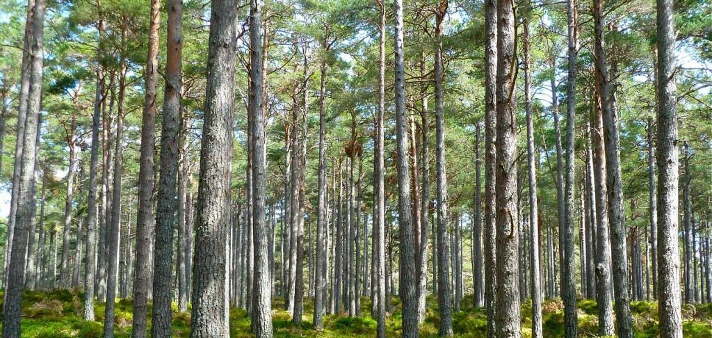 Realizamos informes medioambientales de gran calidad sobre contaminación acústica, contaminación de suelos y tala de árboles
